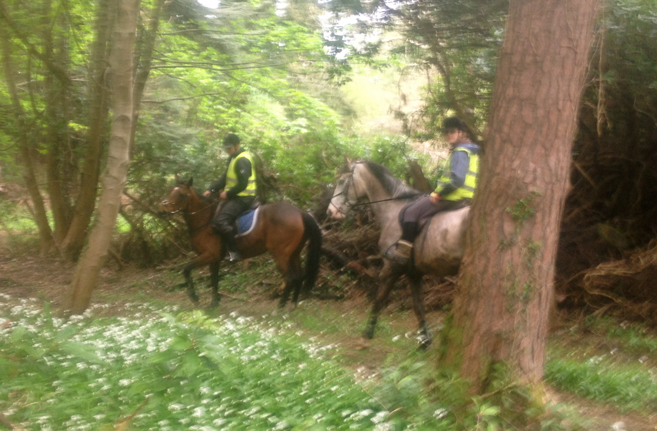 Horse Trekking Tours Wicklow