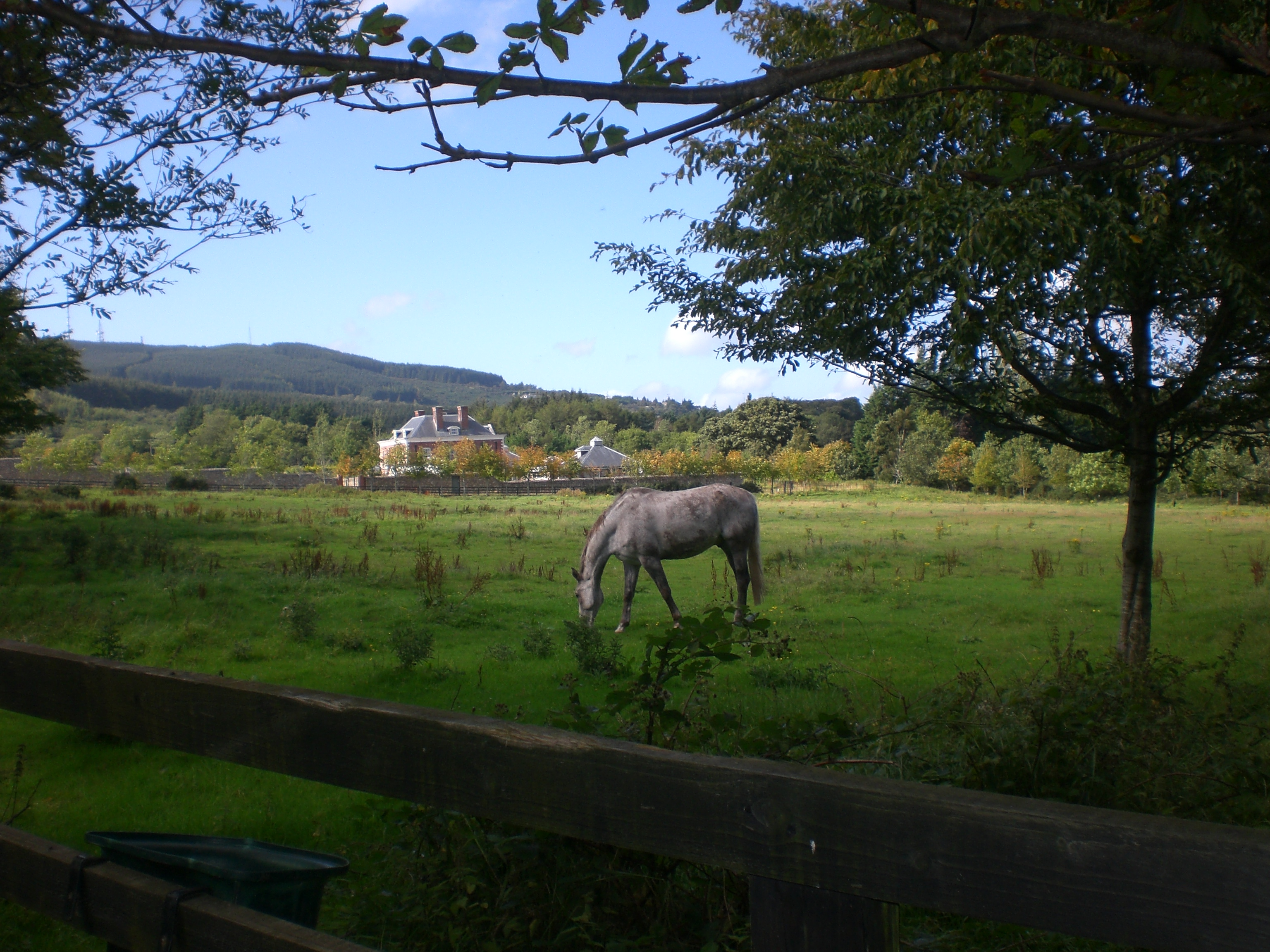 Out and about horse riding