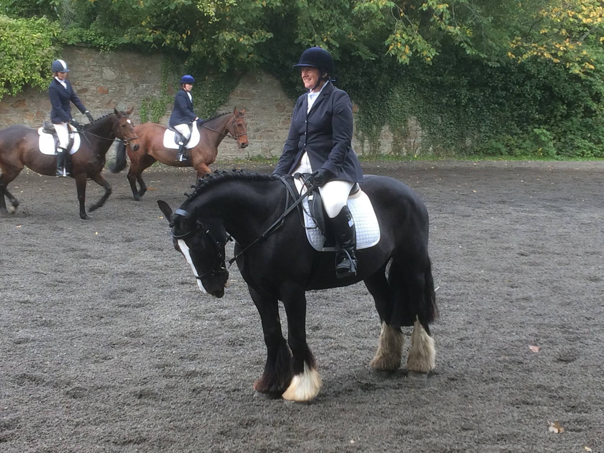 Dressage Horse Competition Training
