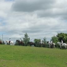 Guide Horse tour