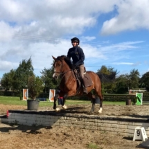 Horse Show Jumping Training