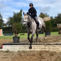 Horse Show Jumping Lessons